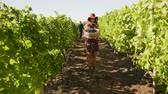 виноград : Woman smiling and lifting a basket with grapes to the camera, slow motion footage Стоковые видеозаписи