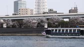görme : Sumida River in the spring