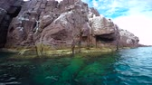 seals : An exciting safari trip on the sea of Cortez. Mexico.
