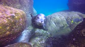 tropikal : Fascinating underwater diving with sea lions in the sea of Cortez. Mexico.