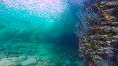 passatempos : Fascinating scuba diving in the sea of cortez. Mexico.