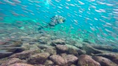 seals : Fascinating scuba diving in the sea of cortez. Mexico.