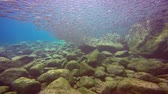 depth : Fascinating scuba diving in the sea of cortez. Mexico.
