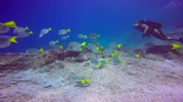 passatempo : Fascinating scuba diving in the sea of cortez. Mexico.