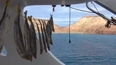 An exciting trip on the sea of Cortez. Mexico. Стоковые видеозаписи