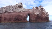 An exciting safari trip on the sea of Cortez. Mexico.