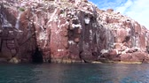 meksyk : An exciting safari trip on the sea of Cortez. Mexico.