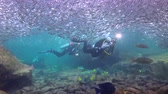 Fascinating scuba diving in the sea of cortez. Mexico.