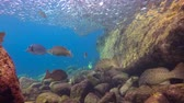 afgrond : Fascinating scuba diving in the sea of cortez. Mexico.