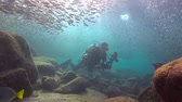 abismo : Fascinating scuba diving in the sea of cortez. Mexico.