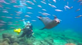 plunge : Fascinating underwater diving with sea in the sea of Cortez. Mexico.