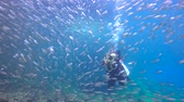 hloubka : Fascinating underwater diving with sea in the sea of Cortez. Mexico.
