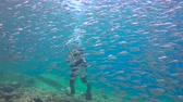 a : Fascinating underwater diving with sea in the sea of Cortez. Mexico.