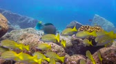 aquático : Fascinating underwater diving in the sea of Cortez. Mexico.