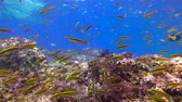 abismo : Fascinating underwater diving in the sea of Cortez. Mexico.