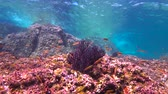 passatempo : Fascinating underwater diving in the sea of Cortez. Mexico.