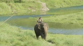 elefante : CHITWAN, NEPAL - MARCH, 2018: Asian elephant with the man walks in national park. Vídeos