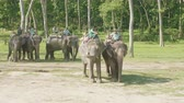 CHITWAN, NEPAL - MARCH, 2018: Elephant riders waits the tourists for safari in jungle.
