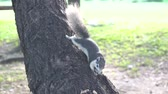 The squirrel eat nut on the tree in the park.