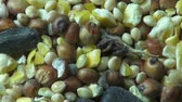 kernels : Seeds, Grains, Pet Foods, Grains