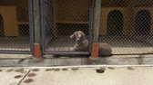 miséria : Lonely Caged Dogs, Canines, Neglect, Abuse Stock Footage