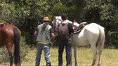 animais : Horseback Riding, Horses, Animals Stock Footage