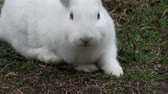 sivri : White Rabbits, Bunny, Hare, Easter, Nature