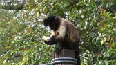 lanche : Monkeys Eating, Primates, Zoo Animals, Wildlife, Nature