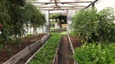 crescido : Greenhouse, Plants, Vegetables, Agriculture Stock Footage