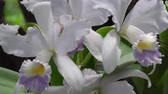 springtime : White Flowers, Plants, Nature, Natural