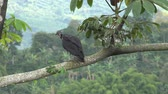 raro : Vulture, Birds of Prey, Animals, Wildlife, Nature