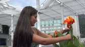 brasileiro : Hispanic Woman touching flowers