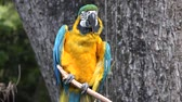 animali : Parrot selvaggio su Perch