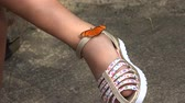 animais : Butterfly on Shoe Stock Footage