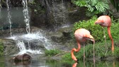 sediento : Agua potable Flamingo