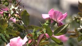 Pink Flowers And Plant Leaves