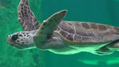 рептилия : Sea Turtles And Reptiles