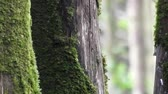 musgo : Mossy Trees In Forest