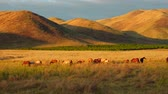 Айдахо : Eating Horses Pasturing on Farm Land With Mountains Aerial Wide Angle