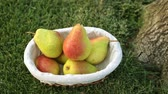 pereira : Pears in a basket on the grass. Fruit harvest. Vídeos