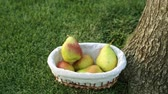 pereira : Basket of pears on the grass Stock Footage