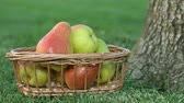 pereira : Ripe pears in a basket on the grass.