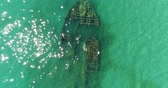 wreck dive : Aerial photography, a sunken ship in the sea. Stock Footage