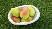 pereira : Beautiful pears on a background of green grass. Harvesting pears.