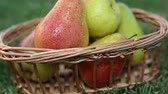 pereira : Fresh juicy pears in a basket, close-up.
