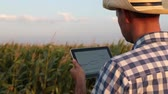 agronomist : Male farmer with tablet in a field of corn Stock Footage