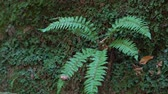 nieuw zeeland : Green wild forest, nature background. Fern in the forest.