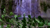 patak : Green leaves on the background of a beautiful waterfall. Beautiful tropical nature.