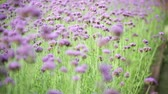 blurred background : flower in garden blur nature background,   Vintage style color tone