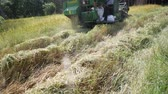 밀 : Sri sa ket,  Thailand October,21 - 2018 : Paddy Rice and Combine Harvesting Harvesting small on October,21 2018 at Sri sa ket Province, Thailand